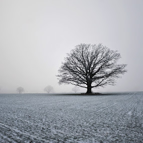 Majestic by Randi Grace Nilsberg - Landscapes Weather ( mystery, silhouette, winter landscape, tranquil, winter scene, sky, tree, nature, oak, misty, afternoon, majestic, lush, twilight, agriculture, dusk, rural, field, environment, fog, serene, meadow, trees, branch, shade, mist, relax, relaxing, tranquility,  )