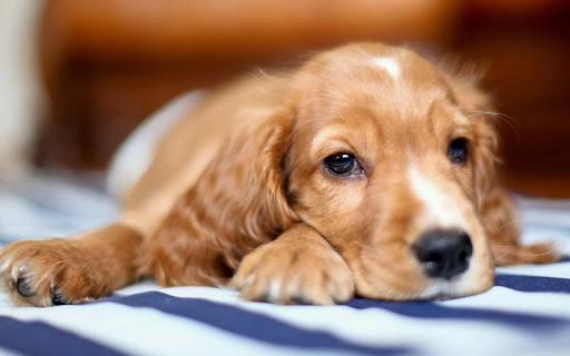 Sleeping Dog HD Wallpaper