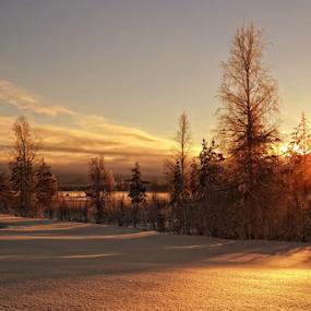 Wintersun by Elisabeth Johansson - Landscapes Sunsets & Sunrises ( clouds, winter, colors, snow, trees, sunlight, sun,  )