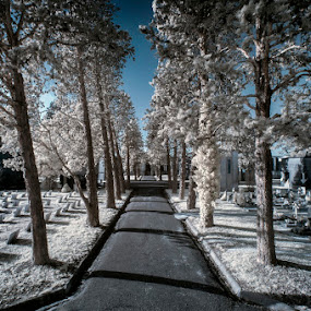 Silence by Alberto Ghizzi Panizza - City,  Street & Park  Historic Districts ( ir, infrared, cemetery, grave, light, graveyard )