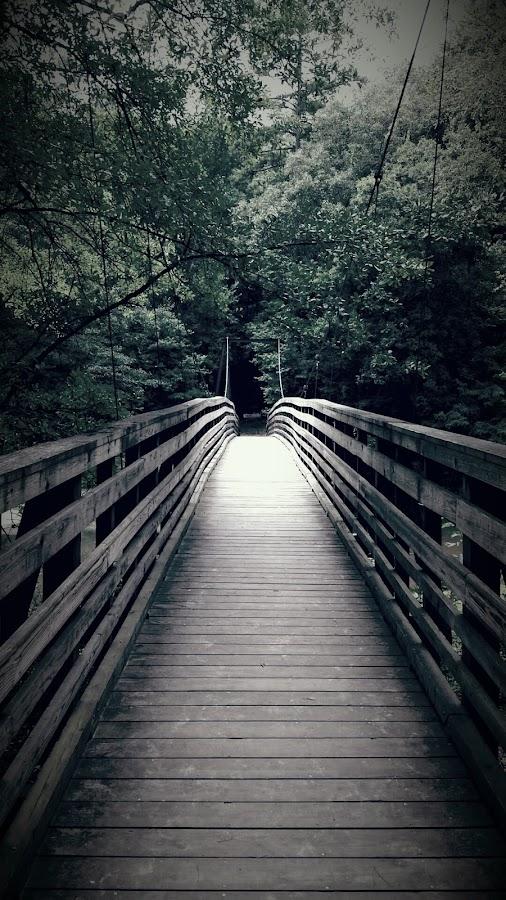 Forest Suspension by Natalie Goldsmith - Buildings & Architecture Bridges & Suspended Structures ( eerie, black and white, vintage, suspension, forest, bridge )