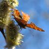 Fly-esthete