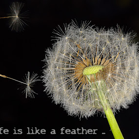 Life is like a feather ... by Charles KAVYS - Typography Captioned Photos (  )