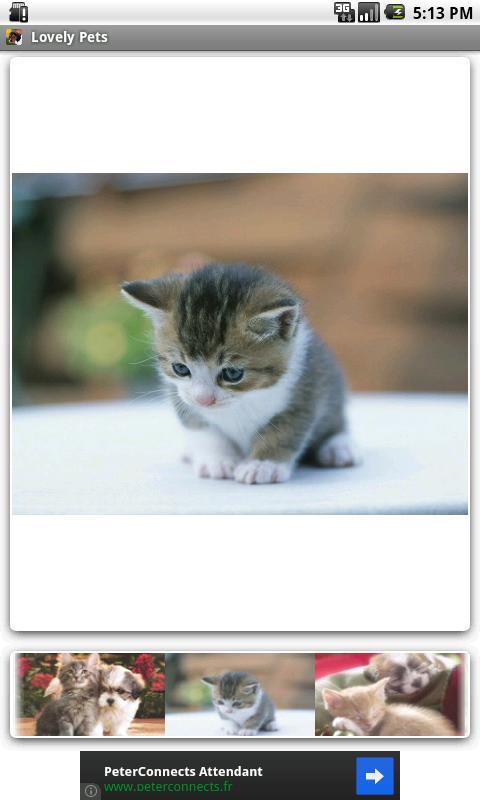 Lovely Pets - screenshot