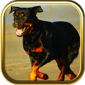 Rottweiler Puzzle Games