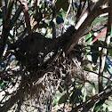 Bird Nest?