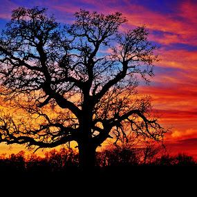by Olivia Emery - Landscapes Sunsets & Sunrises