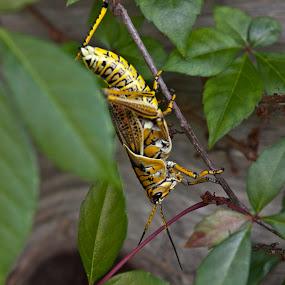 Insect by Steve Bales - Uncategorized All Uncategorized