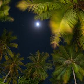 lagon side by GUILLAUME FUNFROCK - Uncategorized All Uncategorized ( wind, moon, light painting, coconut, long exposure, night, garden,  )