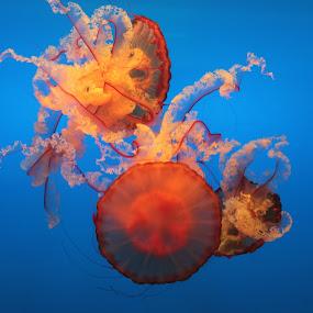 by Mitrava Banerjee - Animals Fish ( jelly colors )