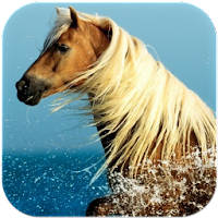 Horse Wallpapers 3.0.3