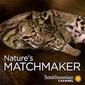 Nature's Matchmaker
