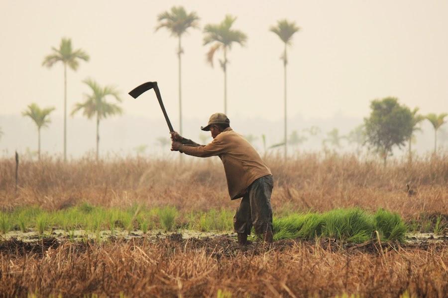 Farmer by Hafies Djoesman - People Street & Candids