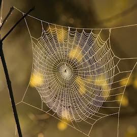 by Milan Horejsi - Nature Up Close Webs ( macro, water drops, abstracts, nature, drop )