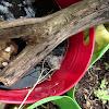 Frog spawn