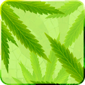 MaryJane Live Wallpaper logo