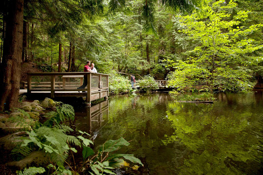 rainforest-park-Vancouver-British-Columbia - A trout pond in the rainforest at Capilano Suspension Bridge Park in Vancouver, British Columbia