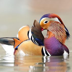 Colors by Stefano Ronchi - Animals Other