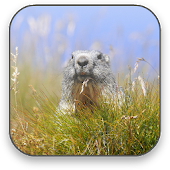 Cute Marmot Free 3D Wallpaper
