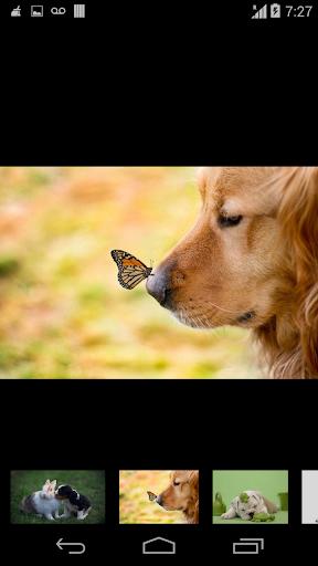玩生活App wallpaper beautiful dog免費 APP試玩