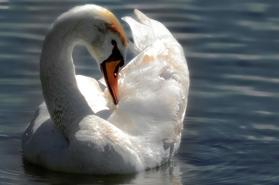 by Manuela Dedić - Animals Birds (  )