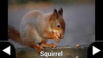 Screenshot of Animal Sounds Flash Cards