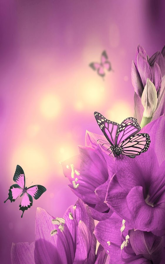 butterfly heaven wallpaper - photo #35