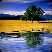 Water Reflection Pro