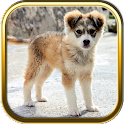 More Cute Puppy Puzzle Games icon