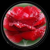 Flower [HD] Wallpapers