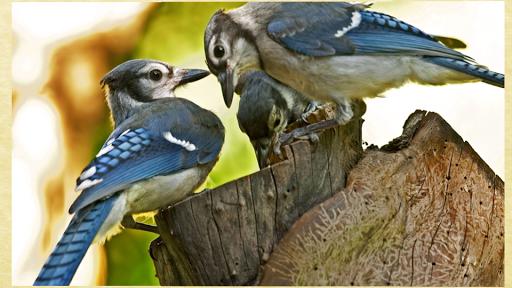 迷人的鳥類圖片