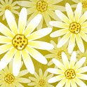 Daisy Flower Live Wallpaper icon