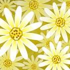 雛菊花動態桌布 Daisy Flower icon