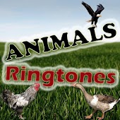 Animal Hayvan Zil Ses Ringtone