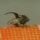 Thorn Chigger