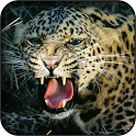 Sfondi leopardo icon