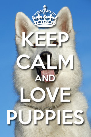 Keep Calm And LOVE PUPPIES uHD