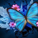 Beautiful Butterfly Pics icon