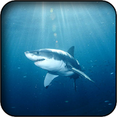 Shark Wallpapers