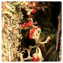 Matchstick Moss