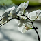 Orchidee-5 (Large).jpg