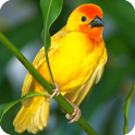 3D Birds Live Wallpaper icon
