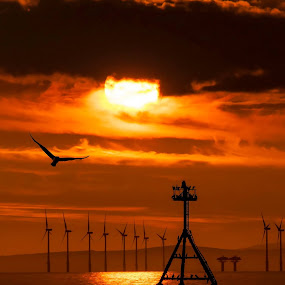 Flimby. UK by Norman Stewart - Landscapes Sunsets & Sunrises ( water, gull, cumbria, wind turbine, sunset, silhouette, sea )
