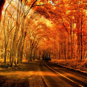 by Daniel Chang - Landscapes Forests ( nature, colorful, color, fall, #GARYFONGDRAMATICLIGHT, #WTFBOBDAVIS )