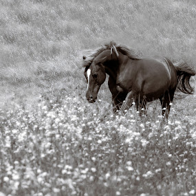 by Larry Rogers - Black & White Animals (  )