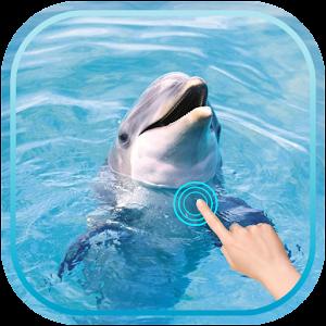 Magic Ripple : Cute Dolphin