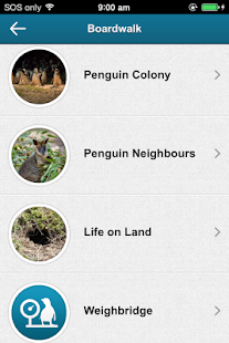 Penguin Parade Phillip Island - screenshot thumbnail