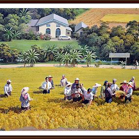 Padi Field by Azman Kamaruddin - Painting All Painting