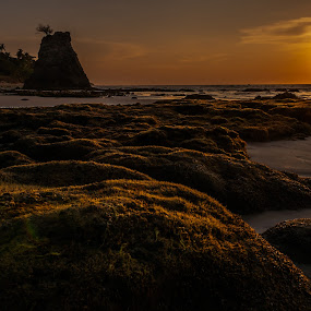 Natural Carpet in golden. by Ted Khiong Liew - Landscapes Sunsets & Sunrises