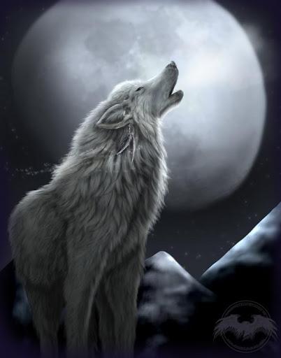 Wolf HD Wallpaper